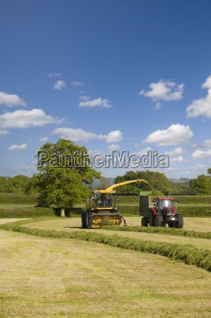 tractor loading silage into truck in