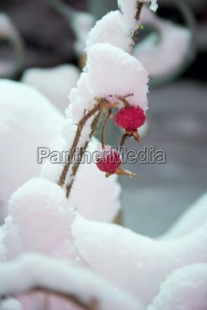 berge winter kalt kaelte verschneit eis