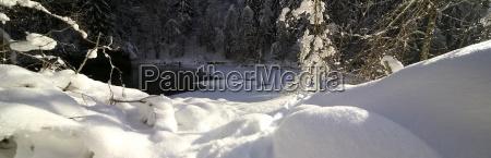 baum winter kalt kaelte oesterreich verschneit