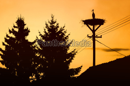 stork standing in nest at sunset