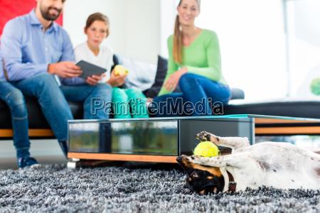 familien hund spielt im wohnzimmer mit