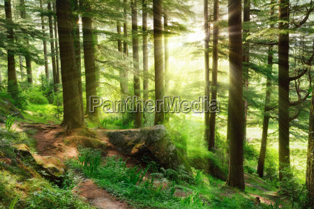 sunrays falling into a vibrant green