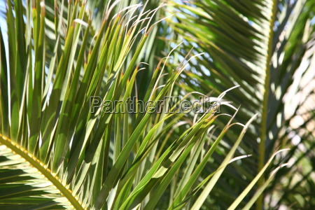 blume pflanze gewaechs blumen kanaren natur