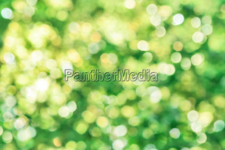 beautiful defocused highlights in foliage