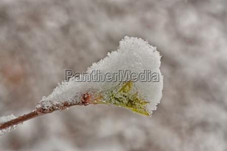 bud im schnee bedeckt