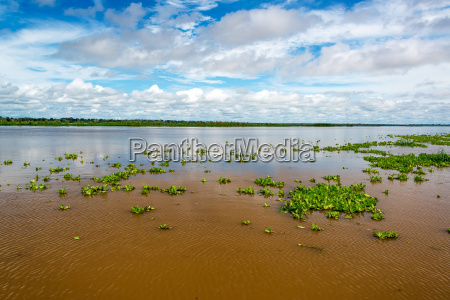 amazon river view
