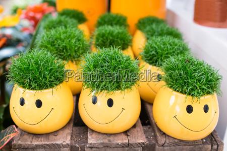 gelbe, blumentöpfe, als, smilie, mit, grünem - 14965957
