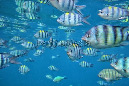 malaysia south china sea perhentian island