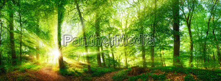 wald panorama mit durch blaetter leuchtenden