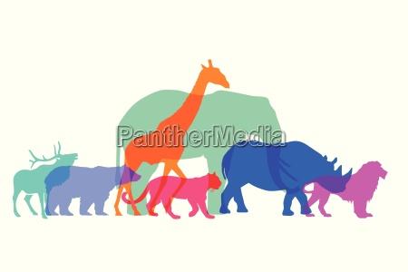 farbige wildtiere auf weiss