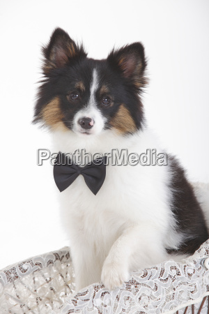 portrait of mixed breed dog wearing