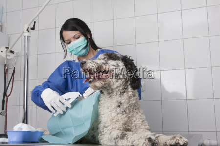 female veterinarian examining dog on table