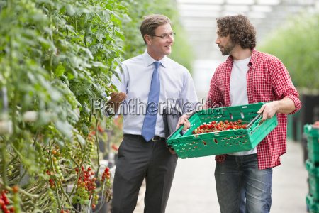 businessman and grower discussing ripe vine