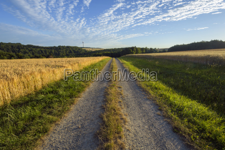 countryside with path through field in