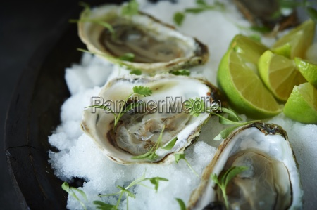 raw oysters in half shells with