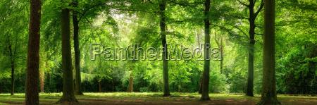 panorama von wald im vertraeumten sanften