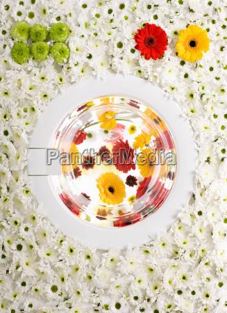 umwelt farbe grafik befoerderung blume pflanze