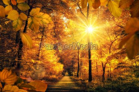 goldener herbst mit viel sonne im