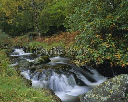 barrow beck and autumnal woodland near