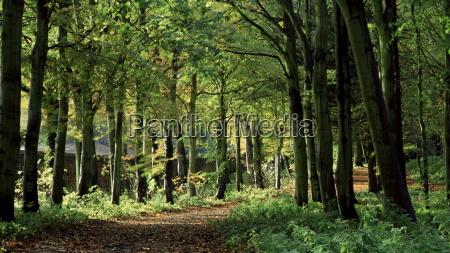 beech woodland alnwick garden alnwick northumberland