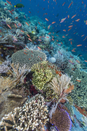 a profusion of coral and reef