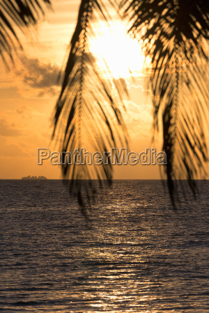 a tropical sunset through palm leaves