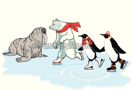 eisbaer pinguin und walross laufen schlittschuh
