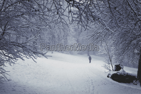 walker in winter forest during snowfall