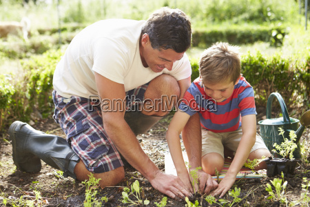 father and son planting seedling in