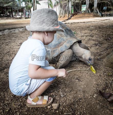 aldabra giant tortoise feeding