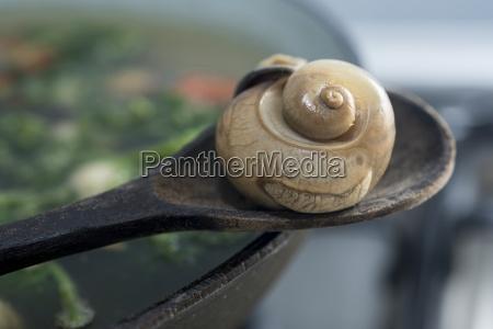an edible snail on a wooden