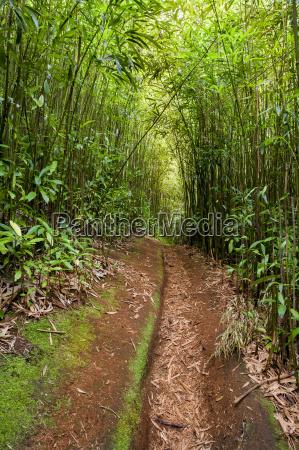 roter schmutzpfad fuehrt durch den bambuswald