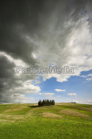 ominous clouds over a grove of
