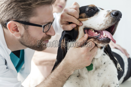 vet examining teeth of a dog