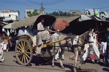 fahrt reisen pferd ross tier verkehr
