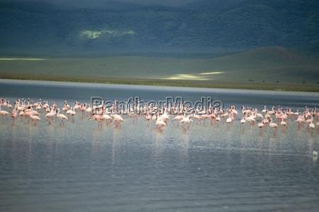 fahrt reisen tier vogel afrika tiere