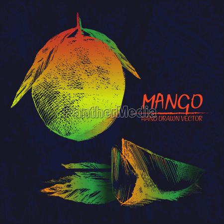 digitaler vektor detaillierte mango hand gezeichnet