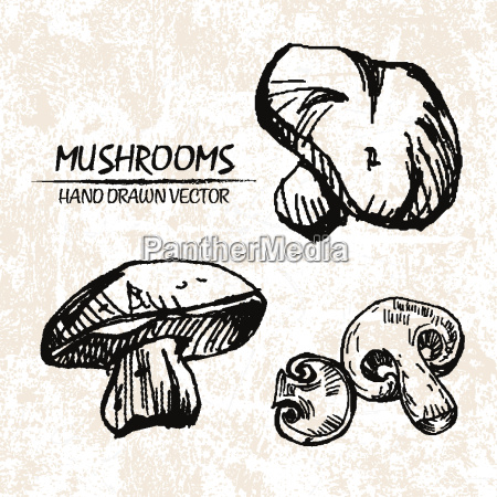 digital vector detailed mushrooms hand drawn