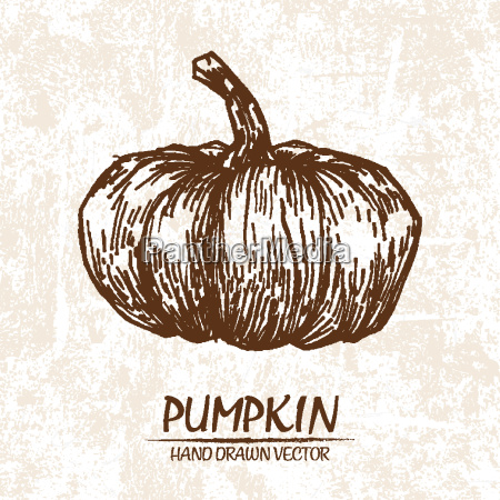 digital vector detailed pumpkin hand drawn