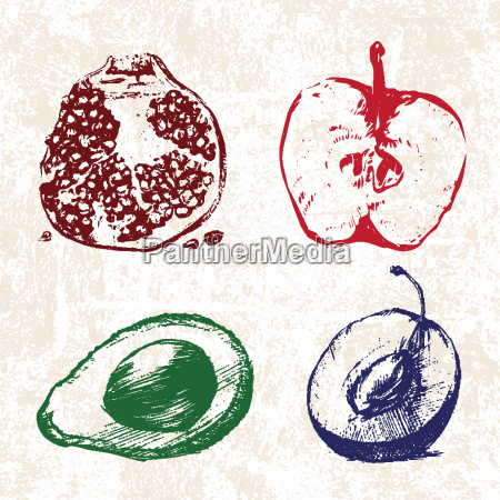 digital vector detailed color fruit hand