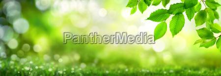 gruene blaetter verzieren einen breiten bokeh