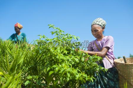 fahrt reisen landwirtschaftlich farbe asien landwirtschaft