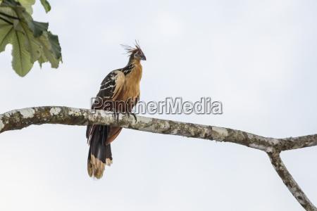 fahrt reisen farbe vogel horizontal ast