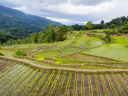 fahrt reisen landwirtschaftlich farbe baum asien