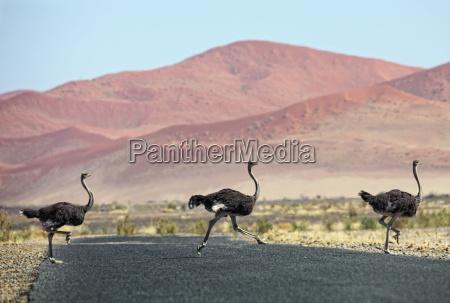 namibia etosha national park three wild