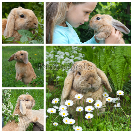 collage with a dwarf rabbit