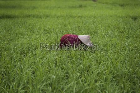 menschen leute personen mensch asien landwirtschaft
